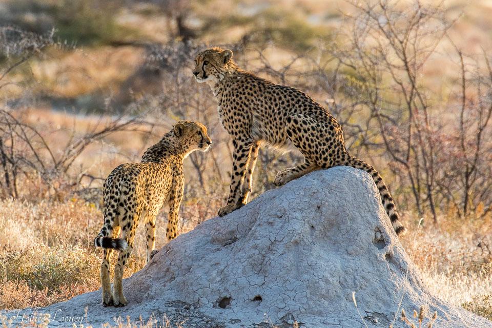 20170708-Nambia-1496.jpg