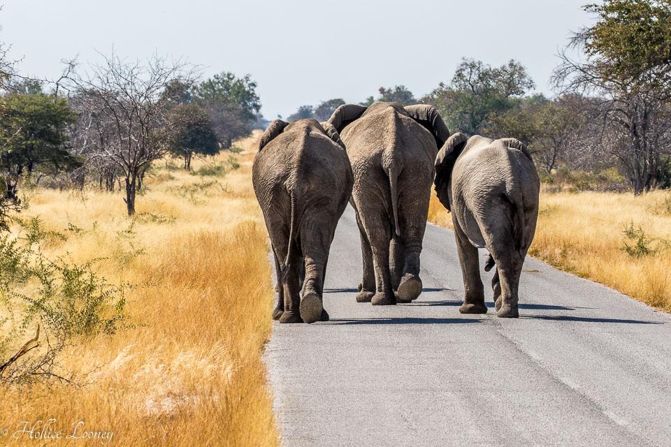 20170708-Namibia-991.jpg