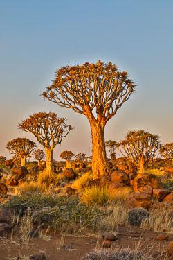 20160627-Namibia-952.jpg