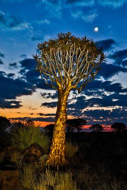 20170626-Namibia-224.jpg