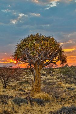 20170626-Namibia-63A.jpg