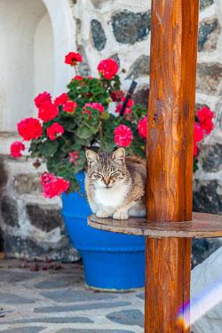 Greece-0509-3141.jpg