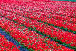 Holland-041712-42.jpg