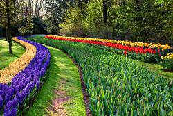 Holland-Tulips-041612-10-Edit-2.jpg
