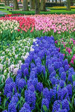 Holland-Tulips-041612-30.jpg