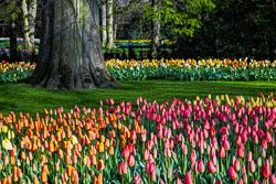 Holland-Tulips-041612-71A.jpg