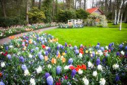 Holland-Tulips-532-Edit.jpg