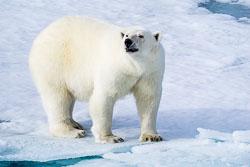 2014-Arctic-627.jpg