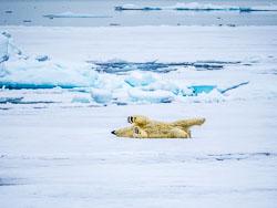 20140701-Arctic-388.jpg