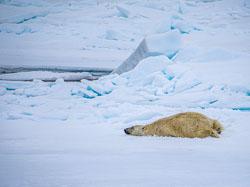 20140701-Arctic-93A.jpg
