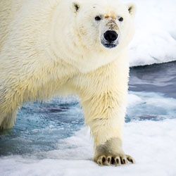 20140702-Arctic-342.jpg