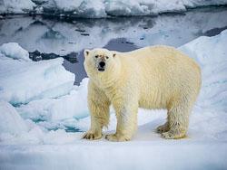 20140702-Arctic-372.jpg