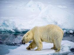 20140702-Arctic-391.jpg