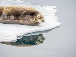 20140703-Arctic-140.jpg
