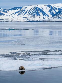 20140703-Arctic-316.jpg