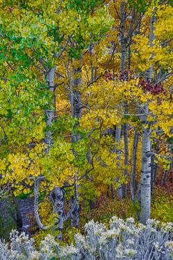 20141012-Eastern-Sierra-446.jpg