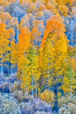 20141013-Conway-Pass-298.jpg