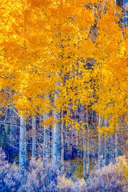 20141013-Conway-Pass-66.jpg
