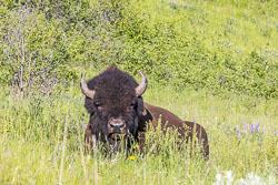 20170531-Montana-550.jpg