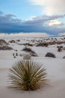 White-Sands-011410-41.jpg